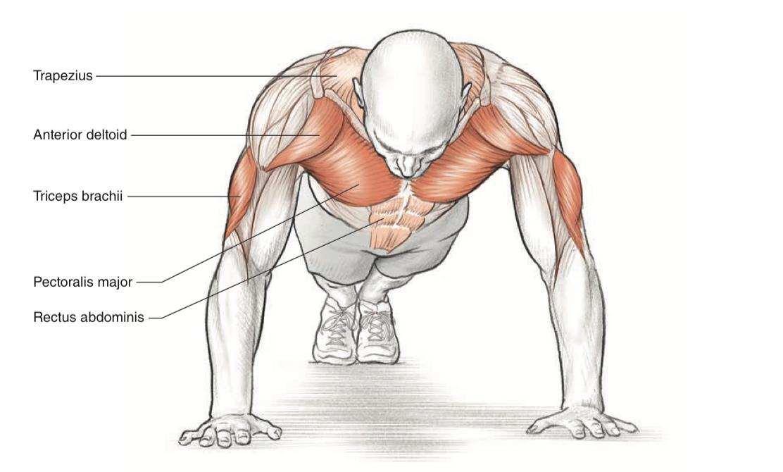 отжимания в картинках какие мышцы качаются колыму